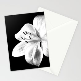 White Lily Black Background Stationery Cards