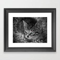 Baby Kitten Framed Art Print