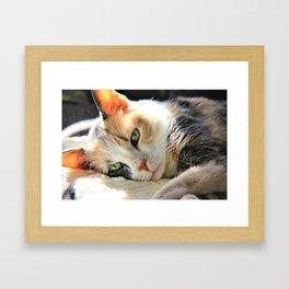 Kitty Light by Reay of Light Framed Art Print