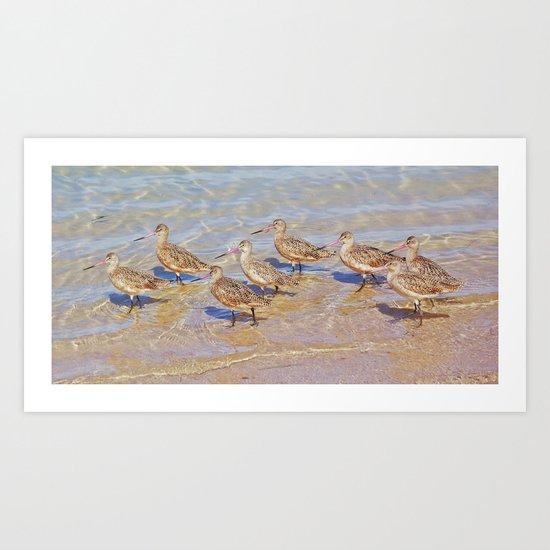 Marbled Godwit Shorebirds Art Print