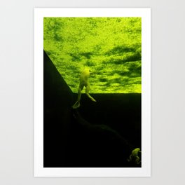 The Mysterious World Of Frogs Art Print