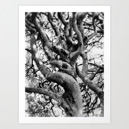 Twisted And Gnarled Art Print