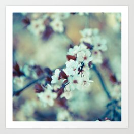 Cool Morning Cherry Blossoms Art Print
