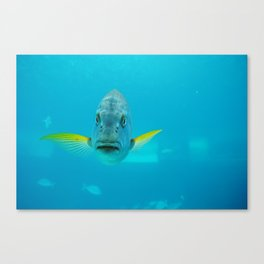 Hello Fish Canvas Print