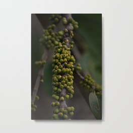 Green Branch - Nature Photography Metal Print