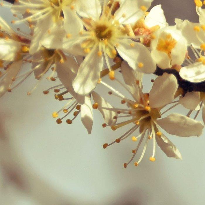Sunny Cherry Blossom  Leggings