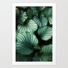 Twisted Nature Art Print