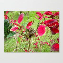 Mini Bird's Nest Canvas Print