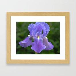 Purple Iris Framed Art Print