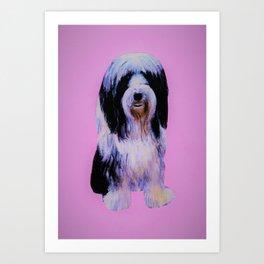 Bearded collie on pink Art Print