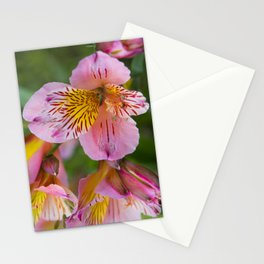 Pink and yellow flora Stationery Cards