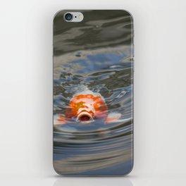 Koi Fish Wanting Food iPhone Skin