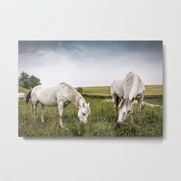 Horses grazing in a country of northern Europe Metal Print