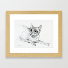 Siamese Cat Hunting Pencil drawing Pet illustration Decor for cat lover Framed Art Print