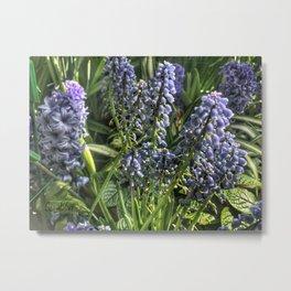 Hyacinths at Vander Veer Botanical Park Metal Print