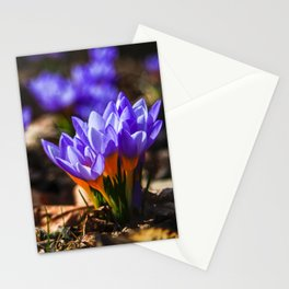 Nature : Wildlife Stationery Cards
