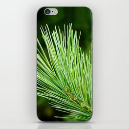 White pine branch iPhone Skin
