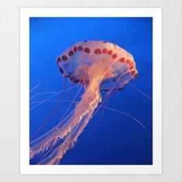 Parachute Of The Medusa Art Print