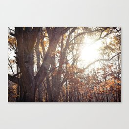 Just Looking Back Canvas Print