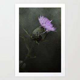 Bull Thistle Bloom Art Print