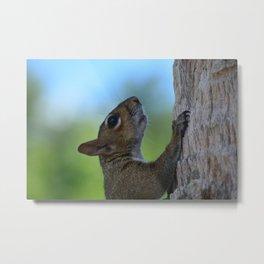 Nuts About Squirrels Metal Print