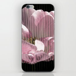 Tulip with gauze textured petals iPhone Skin