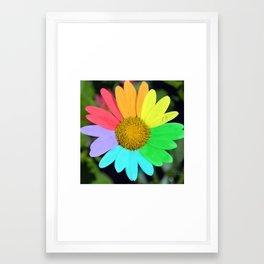 colorful daisy Framed Art Print
