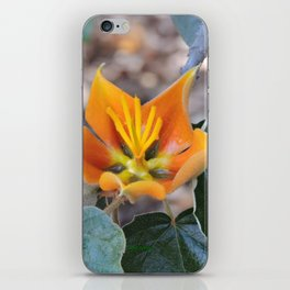 Fremontodendron Blossom iPhone Skin