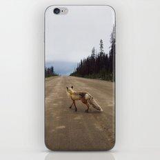 Road Fox iPhone & iPod Skin