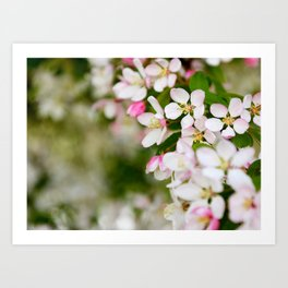 Pretty blossom Art Print
