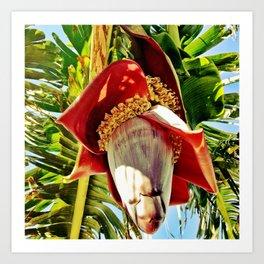Banana Flower Art Print