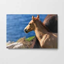 Colt By The Sea Metal Print