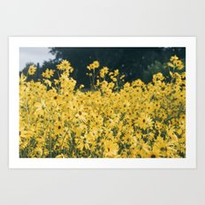 Daisies For Days Art Print