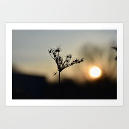 Fall Sunset Art Print