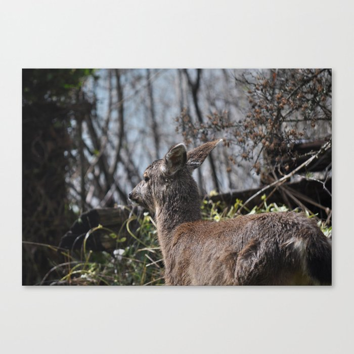 A cute deer visited me 2 Canvas Print