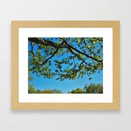 Overhead Oak Tree Branch Framed Art Print