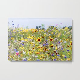 Field of flowers - Colorful - Marrum, Friesland, The Netherlands Metal Print