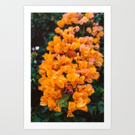 California Blooms III Art Print
