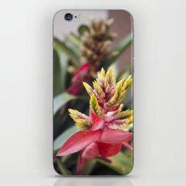 Bromeliad Bloom iPhone Skin