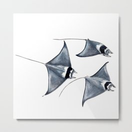Devil fish Manta ray Mobula mobular Metal Print