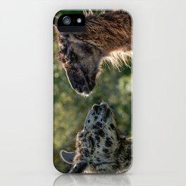 Sweet Llamas iPhone Case
