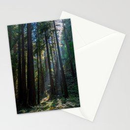 Red Woods & Sun Rays Stationery Cards