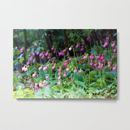 Wild Orchid Lady Slipper Forest Flowers Found in Rhode Island Metal Print