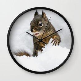 Winter Squirrel III -  Cute Wildlife Animals Nature Photography Wall Clock
