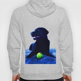 Ziggy Black Labrador Hoody