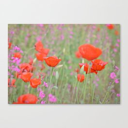 Poppies and Campions Canvas Print