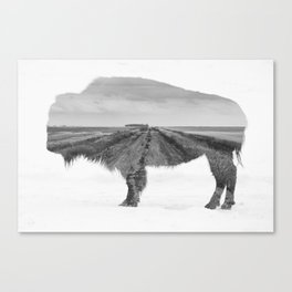 Bison and Prairie Road Blend BW Canvas Print