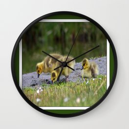 goslings getting their grub on Wall Clock