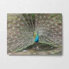 .: peacock :. Metal Print