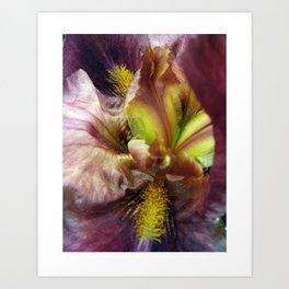 Iris Abstraction #100 Art Print